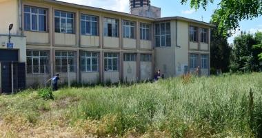 Buruieni şi pisici moarte în curtea Şcolii nr. 22!