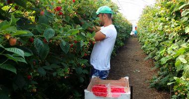 Se caută culegători de legume și fructe