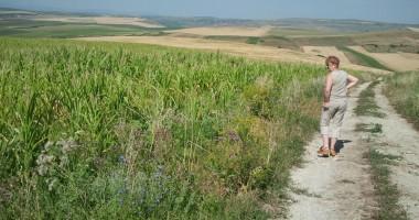 Proiect pentru acordarea de ajutoare agricultorilor afectaţi de secetă