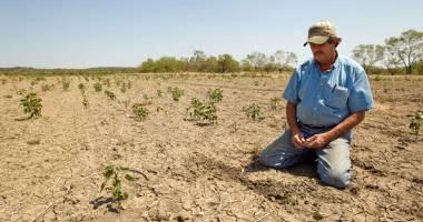 Despăgubiri  pentru culturile  afectate de secetă