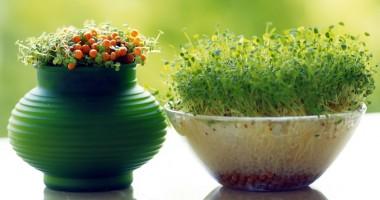 Sfaturi despre ghivecele pentru plante