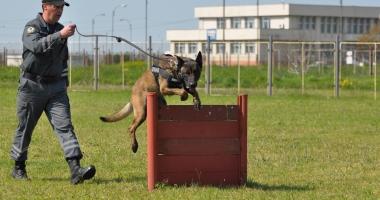 Sid, unul dintre cei mai performanţi câini ai Vămii Române, iese la pensie