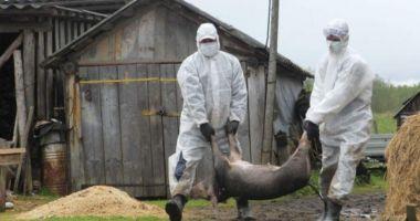 Situație extrem de gravă la Constanța. 79 de focare de pestă porcină în 39 de localități din județ