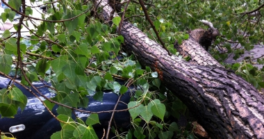 Șofer lovit de un copac căzut, la Corbu