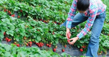 Spaniolii vor români pentru munca  la câmp. Câţi bani se pot câştiga