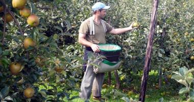 Spaniolii vor români care să culeagă și să le ambaleze fructele