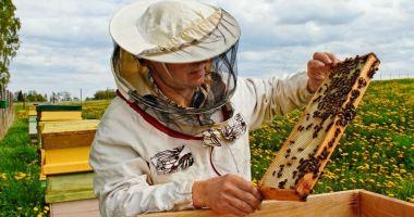Măsuri de sprijin pentru apicultori. Care este cuantumul ajutorului
