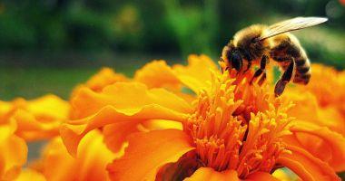 Au început plăţile pentru apicultori. Ce sumă a fost alocată