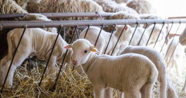 Subvenţiile pentru sectoarele vegetal şi zootehnic au fost aprobate
