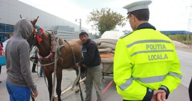 Sute de căruţaşi, amendaţi de poliţiştii locali, în Constanţa