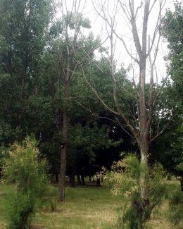 Copacii uscaţi din parcul Tăbăcărie, tăiaţi