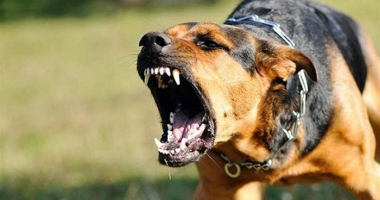 Dosar penal pe numele proprietarei câinilor care au atacat şi mutilat trei persoane