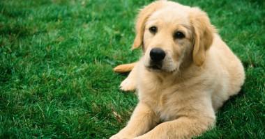 Ce arată respiraţia dificilă a câinelui