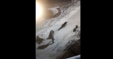 ATENŢIE, SCENE TERIBILE! Femeie atacată de câini în fața blocului - VIDEO