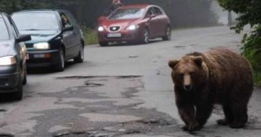 Un bărbat şi o adolescentă, atacaţi de urs în faţa blocului