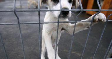 Marea Britanie interzice vânzarea puilor de câini și pisici în magazine