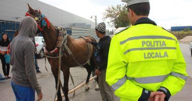 """""""Vânătoarea"""" de căruţe continuă. Poliţia Locală solicită sprijinul constănţenilor"""