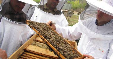 Veste bună pentru apicultori: a fost prelungit termenul de depunere a documentelor justificative!