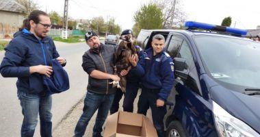 Unul dintre puținii vulturi pleșuvi negri din Europa a poposit în curtea unui român