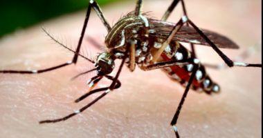 ALERTĂ! Alte cinci cazuri de infecție cu virusul West Nile