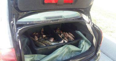 Zeci de kilograme de peşte, confiscate de polițiștii  de frontieră