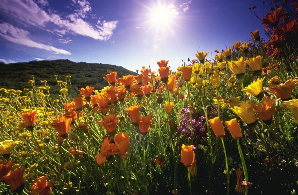 Классные цветы картинки 8