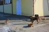 Câinii comunitari au reapărut prin cartiere.  Primarul Constanţei promite un nou adăpost modern