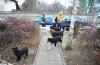 Ce se întâmplă cu câinii maidanezi din Constanţa.  Ce soluţie a găsit Primăria