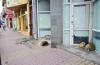 Maidanezii fac legea la Constanţa! Adăpostul e ferecat, iar străzile - pline de câini